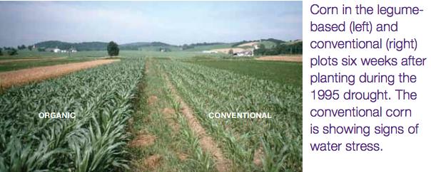 Conventional vs Organic - Roland Institute Trial