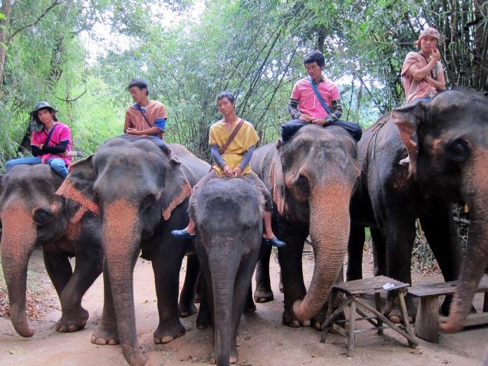 elephant-farm