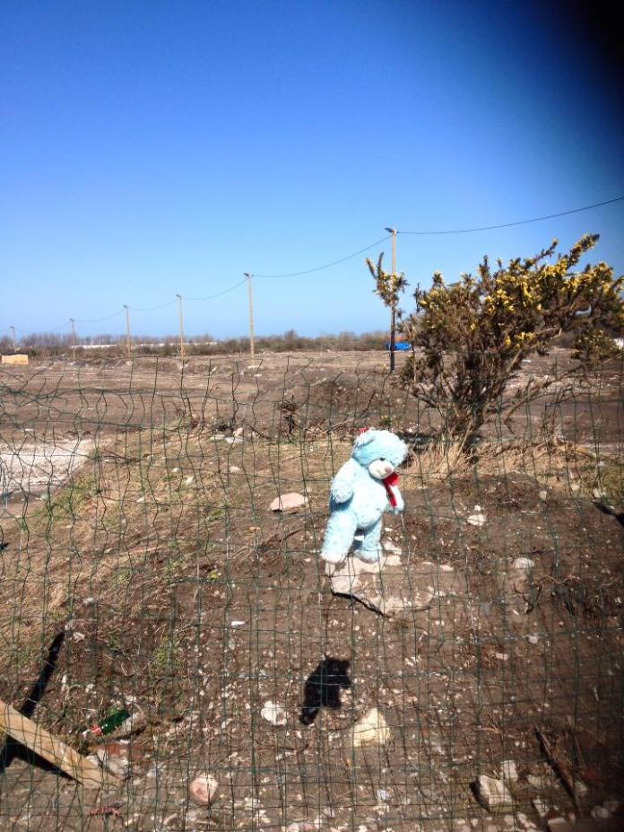 teddy in demolished Calais camp