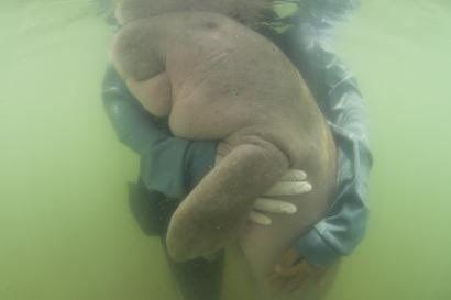 dugon